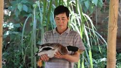 """Lão nông Sơn La thu trăm triệu đồng mỗi năm nhờ nuôi toàn """"hàng độc"""""""