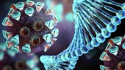 Các nhà khoa học đã tìm thấy điểm yếu của virus corona