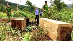 Gia Lai: Hạt trưởng kiểm lâm xác nhận gỗ sai quy định cho vợ chủ tịch huyện