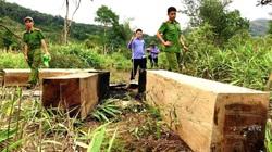 """Gia Lai: Sở NNPTNT ra thông báo """"khẩn"""" hoãn họp kiểm điểm cán bộ để mất rừng"""
