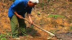 Cuốc đất đào được bình cổ báu vật, người nông dân tưởng nhầm bô đi tiểu suốt 26 năm.