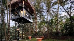 Khách sạn cây nằm giữa rừng Bali
