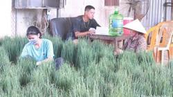 Nghệ An: Ảnh hưởng dịch Covid-19 rau xanh hạ giá mạnh