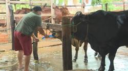 Đắk Lắk: Bắt quả tang lò mổ bơm nước vào bụng bò