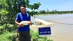 """Trai Hà Nội nuôi toàn cá thuộc hàng """"khủng"""" chuẩn VietGAP, lái buôn đến tận ao mua hết"""