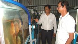 Bất ngờ trang trại nuôi cá cảnh công nghệ cao cho thu nhập tiền tỷ của một nông dân tỉnh Long An