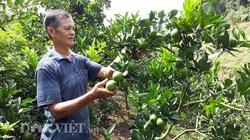 """Điện Biên: Trang trại của ông nông dân từng mang tiếng """"khùng"""" nhìn đâu cũng ra con đặc sản, cây đặc sản"""