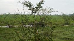 TP HCM: Loài cây nguy hiểm nhất thế giới mọc tràn lan, gai đâm vào chân bị sốt mất mấy ngày