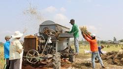 Đồng Tháp: Nông dân chỉ học đến lớp 2 sáng chế máy tuốt hạt mè bán ra cả nước ngoài, thu tiền tỷ