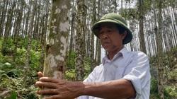 """Quảng Ninh: Bị vợ """"dọa"""" lên """"doạ"""" xuống mà vẫn liều """"ôm"""" gần 70ha đất cằn rồi làm """"một người trồng rừng trầm lặng"""""""