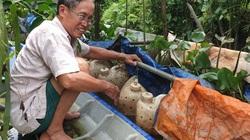 Xót xa, lươn nuôi trong can nhựa của 1 nông dân tỉnh Hậu Giang lăn ra chết cả ngàn con vì thứ thuốc độc này