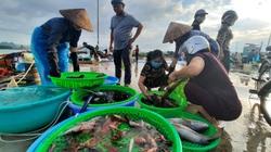 Quảng Ninh: Chuyển chợ cá Hòn Gai đến địa điểm mới, người dân Hạ Long nói gì?