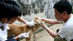Triển khai quyết liệt phòng, chống bệnh dại ở động vật