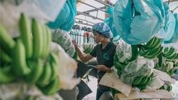 Logistics đang 'đè bẹp' sức cạnh tranh của nông sản Việt
