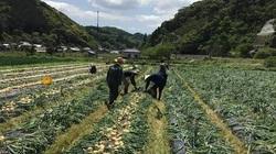 Lao động Việt tại Hàn Quốc: Đối mặt nguy cơ mất việc, thiếu việc làm