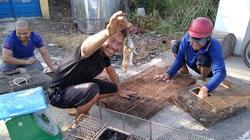 Đồng Tháp: Nước tràn đồng, dân tấp nập săn bắt chuột đồng, mối thu gom vài tạ chuột mỗi ngày bán giá cao