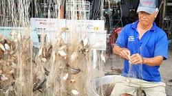 Đồng Tháp: Thả lưới mùa lũ, tay lưới dính chi chít cá, gỡ mỏi cả tay, mùa nước nổi dân vui hơn rồi