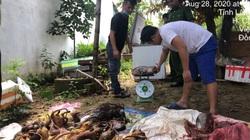 Lâm Đồng: Liên tiếp phát hiện động vật nguy cấp bị xẻ thịt, cấp đông rồi làm mồi nhậu