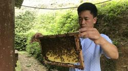 Nông dân Bắc Kạn cùng khấm khá nhờ chia sẻ bí quyết nuôi ong luyện ra thứ mật ngon