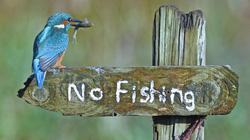 """Chim bói cá đứng cạnh biển """"cấm câu cá"""" lọt top ảnh động vật ấn tượng"""