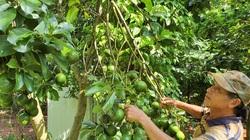 """""""Trái ngọt"""" từ những mô hình nông nghiệp hữu cơ"""