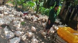 Giá gia cầm hôm nay 14/9: Giá gà thịt công nghiệp tiếp tục giảm, vịt thịt cao nhất 41.000 đồng/kg