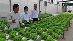Agribank Đông Long An đồng hành cùng người dân trồng rau an toàn