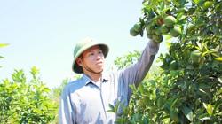 Nghệ An: Ấm no, giàu có nhờ trồng cây ra trái từng chùm treo lủng lẳng trên cành