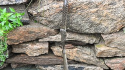 CLIP: Xem mà hồi hộp, cá trê cắn chặt đầu 1 con rắn phía trên, nhưng đuôi bị con rắn phía dưới ngoạm chặt