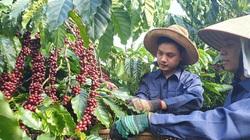 Xuất khẩu cà phê sang EU sau khi có EVFTA có gì khác?