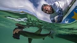 Những bức ảnh chụp dưới nước đẹp nhất được công bố