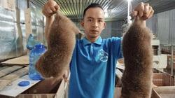 """Quảng Nam: Nuôi loài chuột """"khổng lồ"""", ăn thì chẳng tốn mấy, thịt nung núc, giá 500.000 đồng/kg"""
