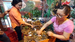 """Quảng Nam: Bán gần 22.000 cây sâm Ngọc Linh """"đẻ trứng vàng"""" cho doanh nghiệp và người dân"""