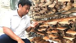 Thanh Hoá: Trồng nấm công nghệ cao, anh kỹ sư điện bỏ nghề về quê thu 2 tỷ mỗi năm