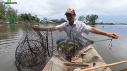 Cà Mau: Người nông dân nuôi tôm, cua khác người, chỉ thu hoạch con to, thu tiền tỷ/năm