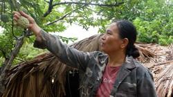 Hà Giang: Vùng đất này dân trồng thứ na bở đặc sản, nuôi con đặc sản trên núi đá mà nhà nào cũng khá giả