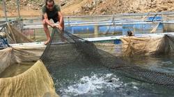 Nhân rộng mô hình giảm nghèo hiệu quả (bài 1): Nuôi cá lồng, dân vùng lòng hồ sông Đà khấm khá