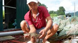 Hà Giang: Nuôi đàn cá đặc sản trên sông Lô, giá 450.000 đồng/kg mà thương lái hỏi mua tới tấp