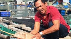 Khánh Hoà: Ông nông dân nuôi cá đặc sản, tôm hùm to bự mà làm nên cơ nghiệp tỷ phú