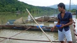 Hà Giang: Đầu tư 15 tỷ giúp nông dân nuôi cá lồng đặc sản, quy mô 1.000 lồng
