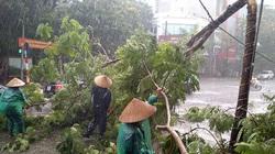 Quảng Bình: 4 người dân tộc vào rừng chưa liên lạc được, 1 phụ nữ chặt cây ngã chấn thương sọ não