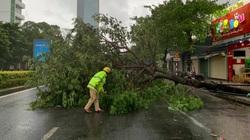 TT-Huế: Hàng chục nhà dân tốc mái, nhiều cây xanh gãy đổ do gió giật mạnh