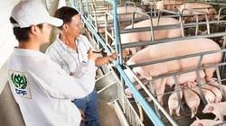 """CP Thái Lan mua lại 43 doanh nghiệp nuôi heo Trung Quốc, """"xâm nhập"""" thị trường thịt heo lớn nhất thế giới"""