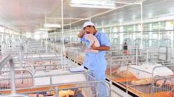 Doanh nghiệp đua nhau xây trại nuôi lợn, cần gấp nhân lực ngành chăn nuôi thú y