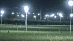 Quảng Ngãi: Thắp điện sáng rực như phố cho cánh đồng trồng hành tím để làm gì?