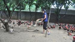 Giá gia cầm hôm nay 2/9: Giá gà thịt bắt đầu chững lại, người nuôi vẫn phải bán giá thấp