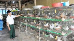 An Giang: Lãi gần nửa tỷ đồng/năm nhờ nuôi bồ câu