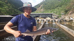 """""""Chỉ huy"""" hàng vạn con cá """"quý tộc"""" không xương, nông dân 9X tỉnh Lai Châu thu cả tỷ đồng"""
