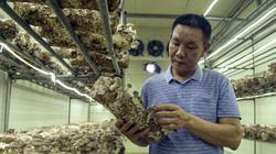 Video: Trồng nấm theo công nghệ Hàn Quốc, nông dân Hà Nội thu hơn 40 tỷ mỗi năm