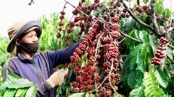 """Nông nghiệp miền Trung - Tây Nguyên: Cần """"cú hích"""" để tạo đột phá"""